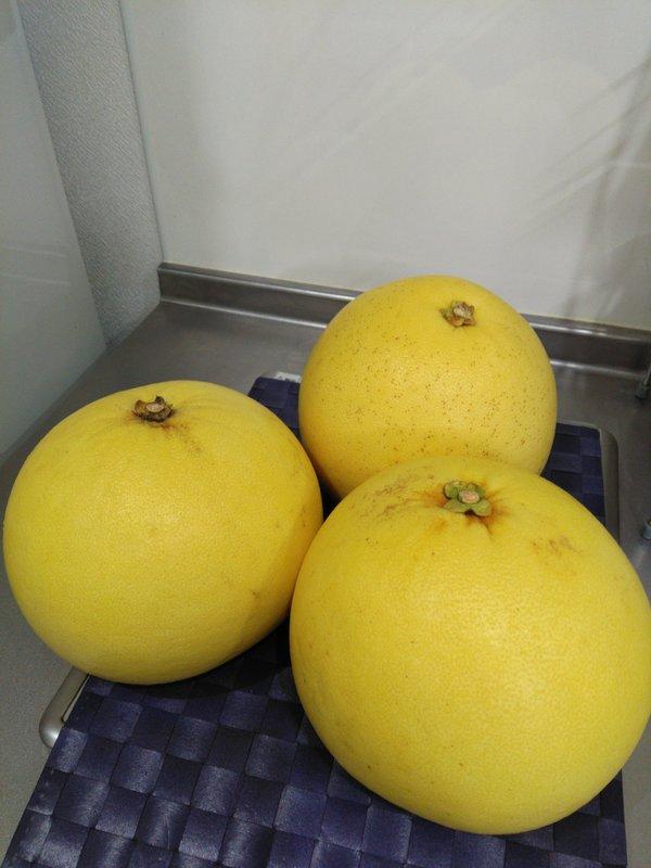 世界一大きな柑橘果物♪